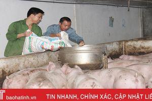Lợn nuôi bằng thảo dược, thịt ngon nhưng chưa nhiều người biết