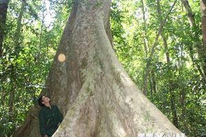 Sức sống mãnh liệt của khu rừng chiến khu D lịch sử ở Bình Phước