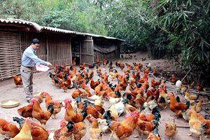 Quảng Ninh: Huy động hơn 10.000 tỷ đồng đầu tư cho nông nghiệp