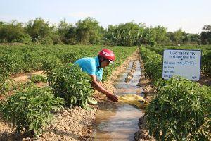 Đà Nẵng: Khẩn trương phòng, chống thiếu nước và xâm nhập mặn