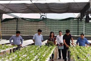 Sản xuất rau công nghệ cao: Hướng đi mới của Tuyên Quang