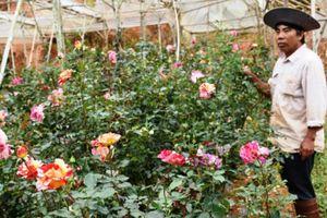 Phố có thung lũng hoa hồng