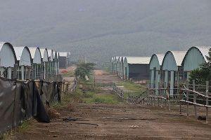 Cảnh hoang tàn bên trong dự án nuôi bò nghìn tỷ ở Hà Tĩnh