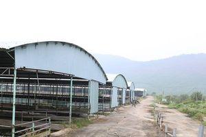 Cựu Chủ tịch BIDV Trần Bắc Hà bị bắt: Dự án nuôi bò tỷ đô 'hóa thành' rừng chuối