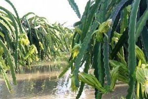 Nông nghiệp phía Nam thiệt hại nặng sau bão số 9