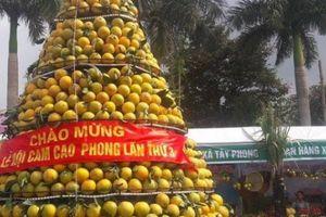 Hòa Bình: Lễ hội cam quýt có giúp nông dân tiêu thụ hết 10 vạn tấn?