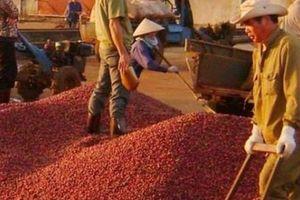 Xuất khẩu tiêu, cà phê chưa hết lo trong năm 2019