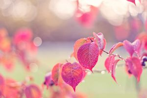 Tử vi tuần mới 3/12 - 9/12: Tuổi Sửu 'tình ái thăng hoa', tuổi Ngọ sẵn sàng hy sinh