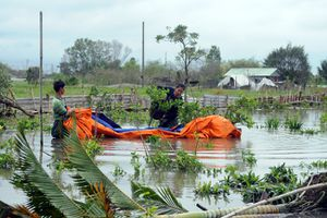 Các làng hoa, cây cảnh phục vụ Tết bị thiệt hại nặng sau bão số 9