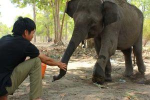 Tây Nguyên cam kết bảo vệ thú rừng
