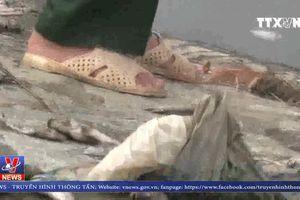 Cá chết hàng loạt ở hồ Cửa Nam, Nghệ An