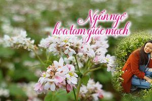 Những 'phượt thủ' xinh đẹp săn hoa tam giác mạch Hà Giang