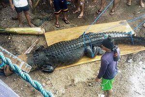 Bắt được cá sấu ăn thịt người dài gần 5m tại Philippines