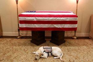 Chú chó nằm cạnh linh cữu cố Tổng thống Bush gây xúc động