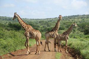 Tây Nguyên: Hưởng ứng Ngày Thế giới Bảo tồn các Loài Hoang dã