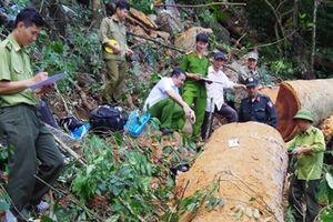 Rừng đặc dụng Phong Quang bị chặt phá