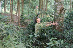 Yên Bái xây dựng chứng chỉ rừng