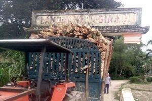 Hy hữu khi xe chở gỗ 'chở' theo cổng làng