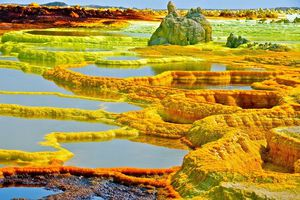 'Cánh đồng vàng' có vẻ đẹp kỳ lạ nhưng cũng 'bốc mùi' nhất hành tinh