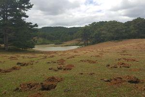 Đào 1.800 hố, xâm hại đồi cỏ hồng tuyệt đẹp bên hồ Đan Kia - Suối Vàng