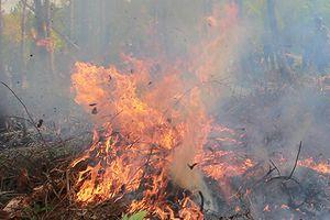 Cháy gần 8.000 m2 rừng ở phường Cửa Ông, thành phố Cẩm Phả