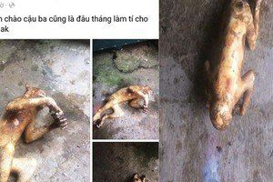 Cảnh cáo nam thanh niên đăng hình ảnh một cá thể khỉ bị giết
