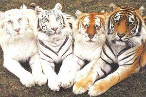 Sững sờ với màu sắc độc đáo của thế giới động vật