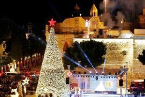 Chiêm ngưỡng cây thông Noel 'đồng xu vàng' đắt nhất Châu Âu