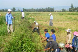 Bình Định: Diệt chuột bảo vệ mùa màng