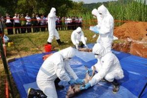 Lào Cai diễn tập phòng, chống dịch tả lợn châu Phi