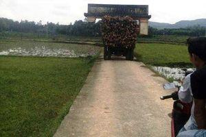 Hi hữu: Xe chở gỗ keo, chở luôn cái cổng chào của làng