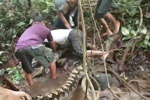 Kinh hoàng phút chạm trán trăn khủng dài 8m trong rừng sâu