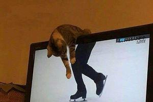 15 hình ảnh chứng minh loài mèo sở hữu tư duy logic kỳ lạ