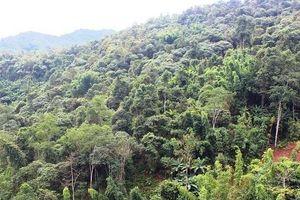 Nguyên chủ tịch xã lập hồ sơ khống, chiếm đoạt tiền bảo vệ rừng
