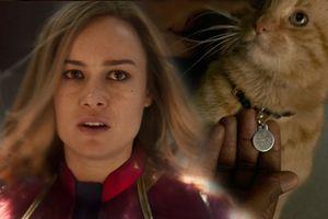 Cư dân mạng phát sốt vì chú mèo trong trailer 'Captain Marvel'