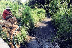 Trang trại chăn nuôi gây ô nhiễm suối Công An