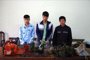 Tạm giữ 3 đối tượng đốn hạ gỗ quý tại rừng Đặc dụng Phong Quang