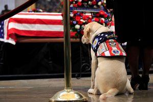 Cảm động chú chó trung thành tiễn đưa cố Tổng thống Bush 'cha'