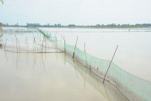 Miền Tây thu hoạch cá mùa lũ