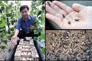 'Bái phục' mô hình tự mình đầu tư tiền tỷ lập trang trại nuôi ruồi lính đen