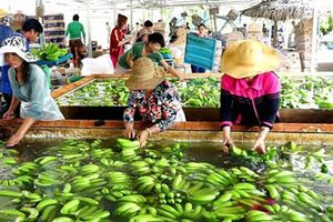 Chế biến - Lời giải cho bài toán xuất khẩu nông sản Việt