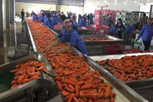 Thị trường Trung Đông - Châu Phi: Cơ hội thúc đẩy giao thương và xuất khẩu