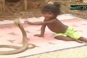 Clip: Phụ huynh Ấn Độ cho trẻ em thoải mái chơi đùa với rắn hổ