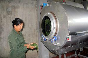 Thái Nguyên: Phát triển cây chè trên vùng đất ATK Định Hóa
