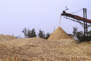 Mối nguy từ 'bán non' dăm gỗ