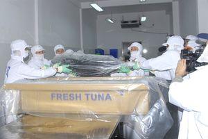 Ngư dân Bình Định dùng công nghệ Nhật khai thác cá ngừ đại dương