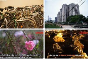Tin tức Hà Nội 24h: Đào Nhật Tân bung nụ nở rầm rộ trước Tết 2 tháng