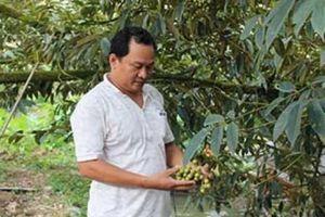 Tiền vốn về, dân làm giàu từ những vườn cây trái đặc sản