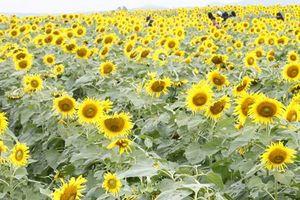 Vượt ngàn cây số 'săn' hoa và những triết lý cuộc đời