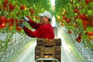 Quy hoạch hơn 20 khu nông nghiệp ứng dụng công nghệ cao